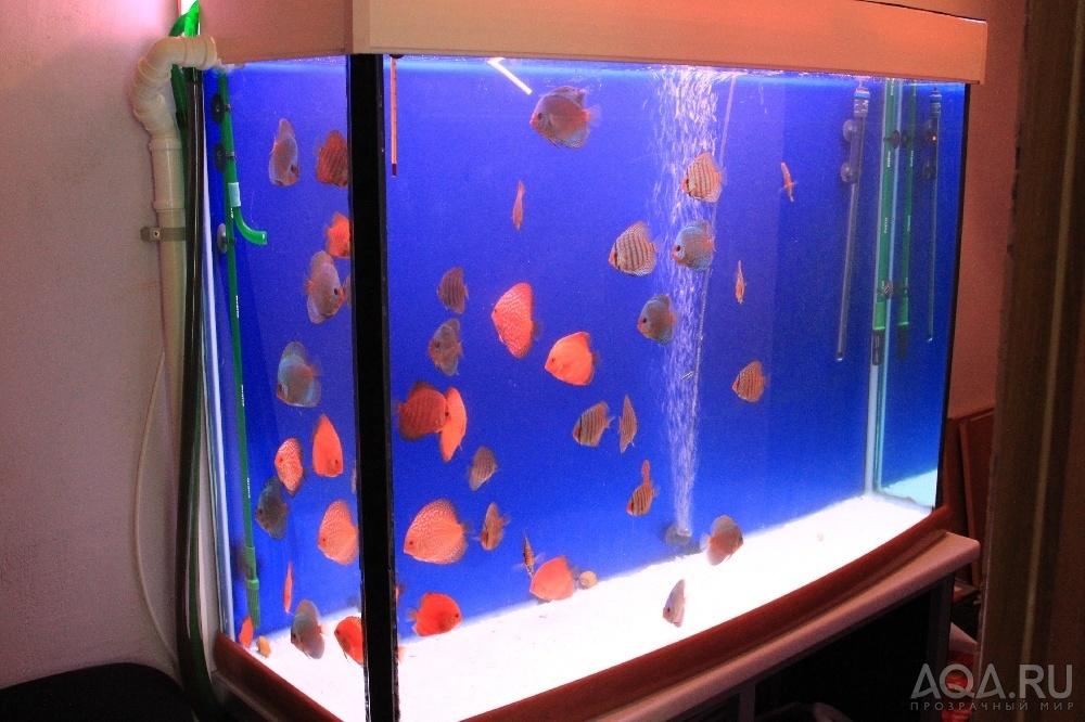 Протока в аквариум своими руками