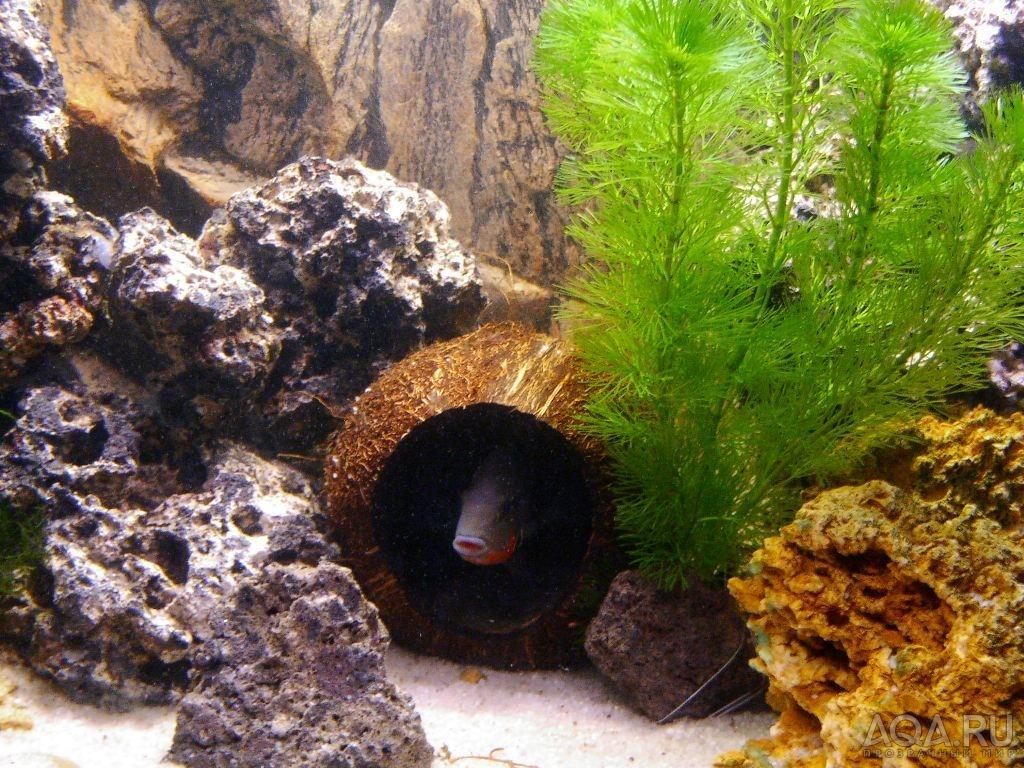 Декор в аквариум из кокоса своими руками