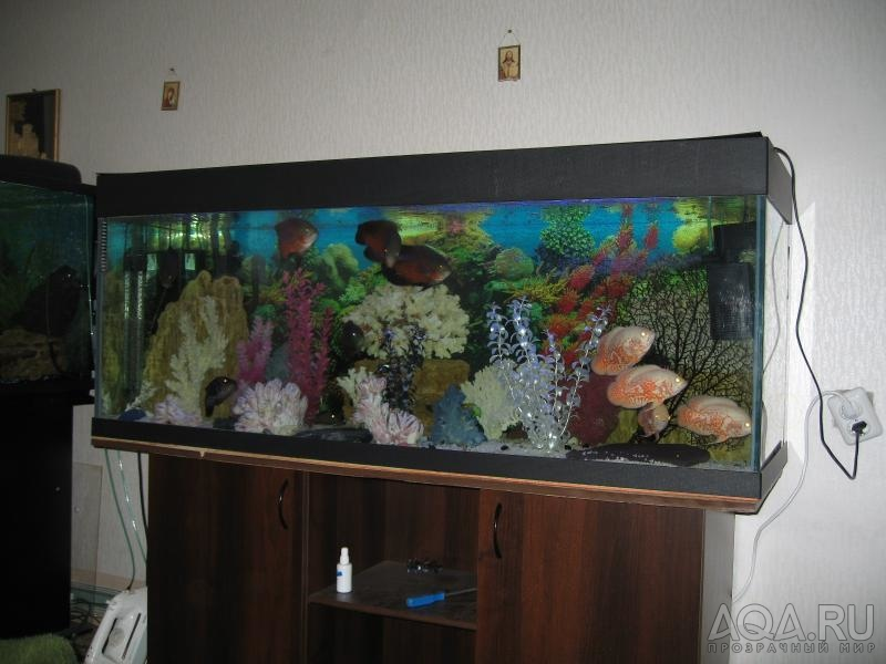 Аквариумы своими руками на 500 литров
