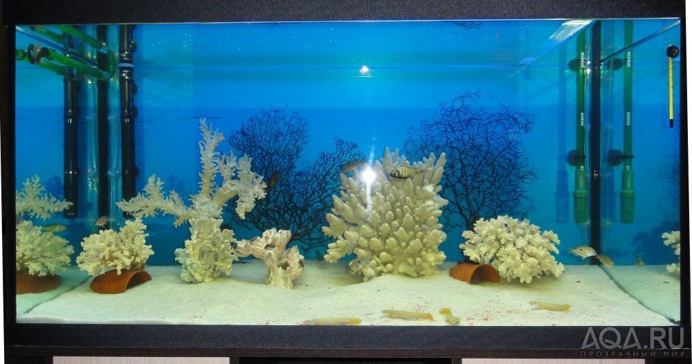 Коралл для аквариума своими руками 191