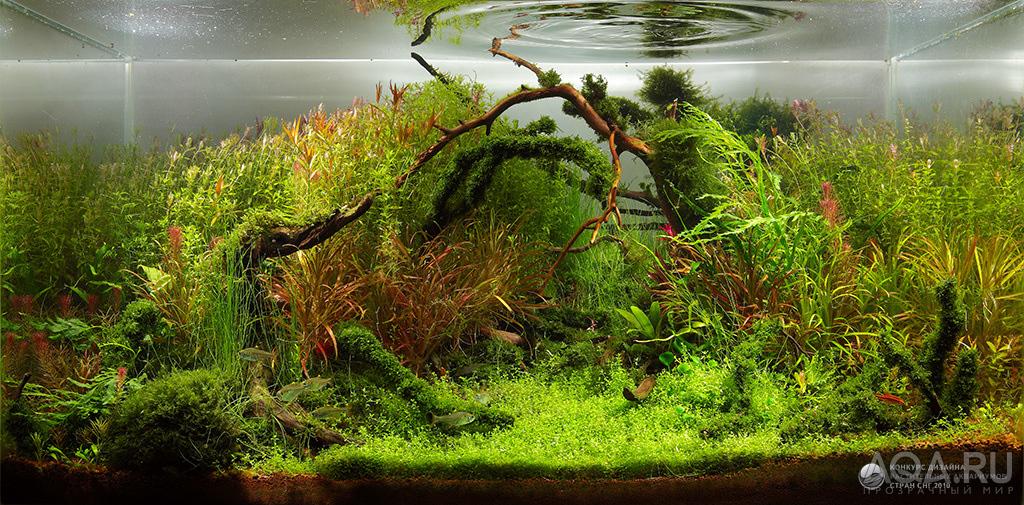 Подкормка для растений в аквариуме своими руками