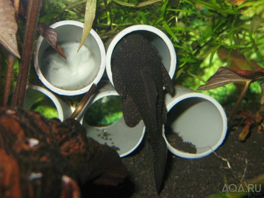 Укрытие для сомов в аквариуме своими руками 16