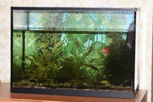 45 литровый аквариум длина аквариума 60 ширина 25 высота 30 ул лизюкова