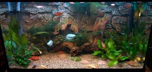 Дизайн аквариума 150 литров фото
