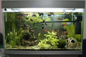 аквариум рыбки фото и содержание
