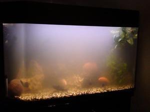 необходимо как сделать воду в аквариуме прозрачной вариантом использования термобелья