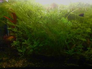 Почему в аквариуме не растет трава