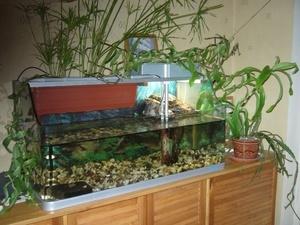 Какие растения можно сажать в аквариум к красноухим черепахам 9