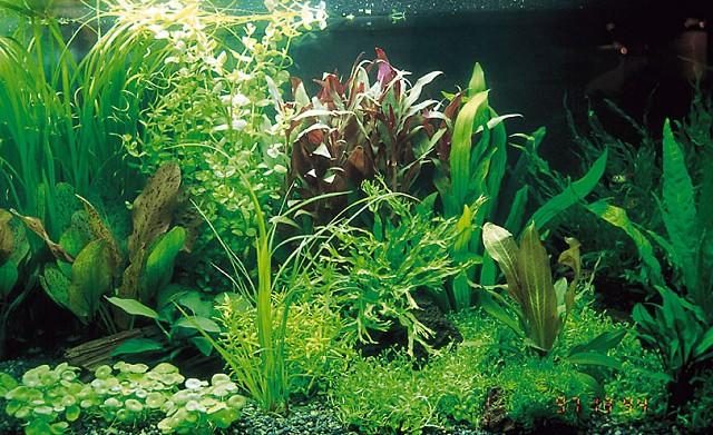 """Основным элементом оформления  """"голландского аквариума """" являются... палюдариум - комбинация подводной и надводной..."""