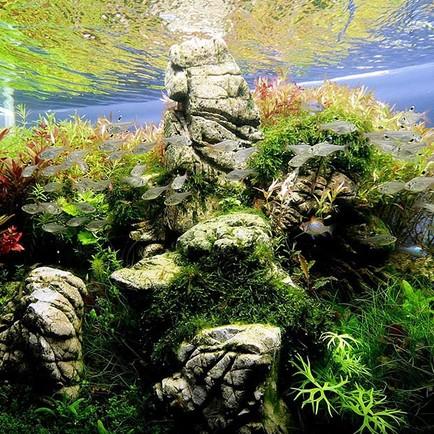Как научиться выращивать аквариумные растения